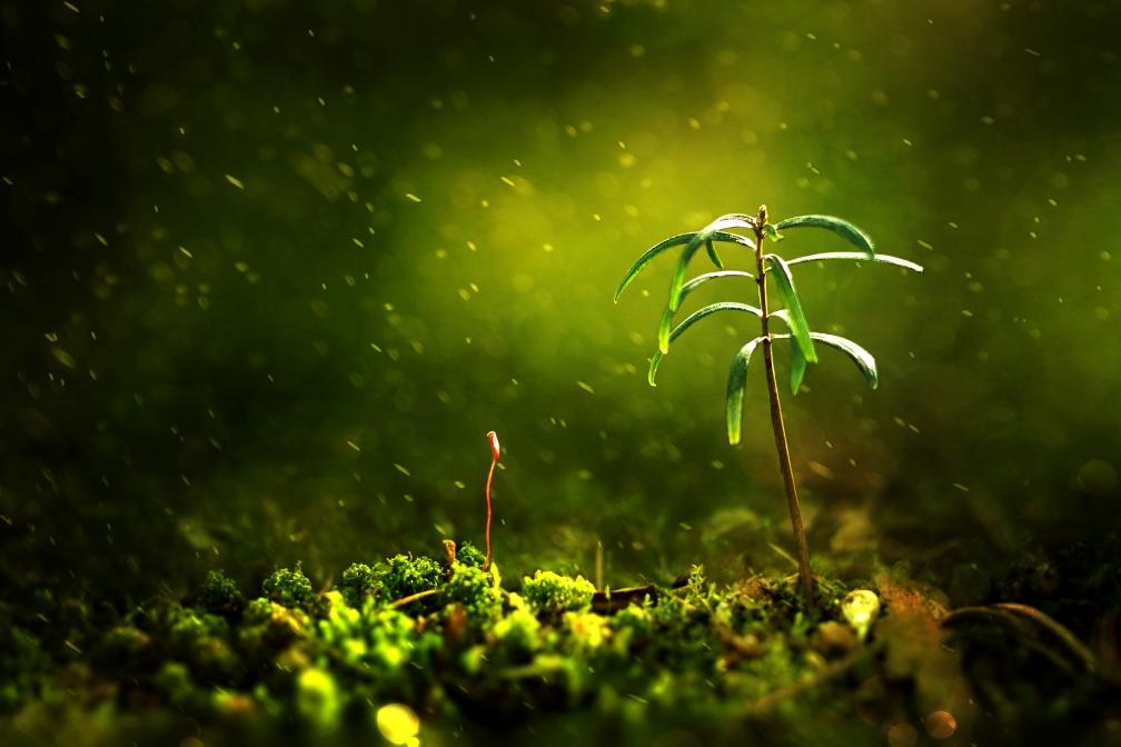 Mossy - Romana Říhová - Nature