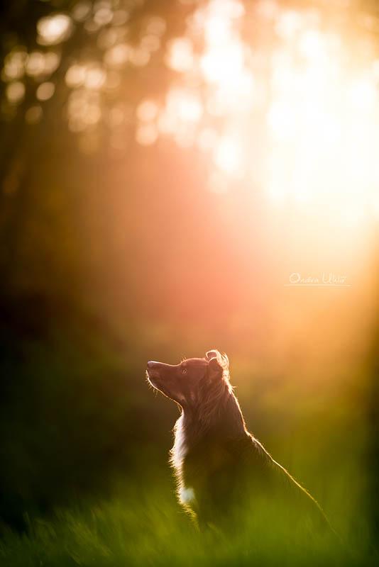 Ondřej Uhlíř fotokurzy focení psů