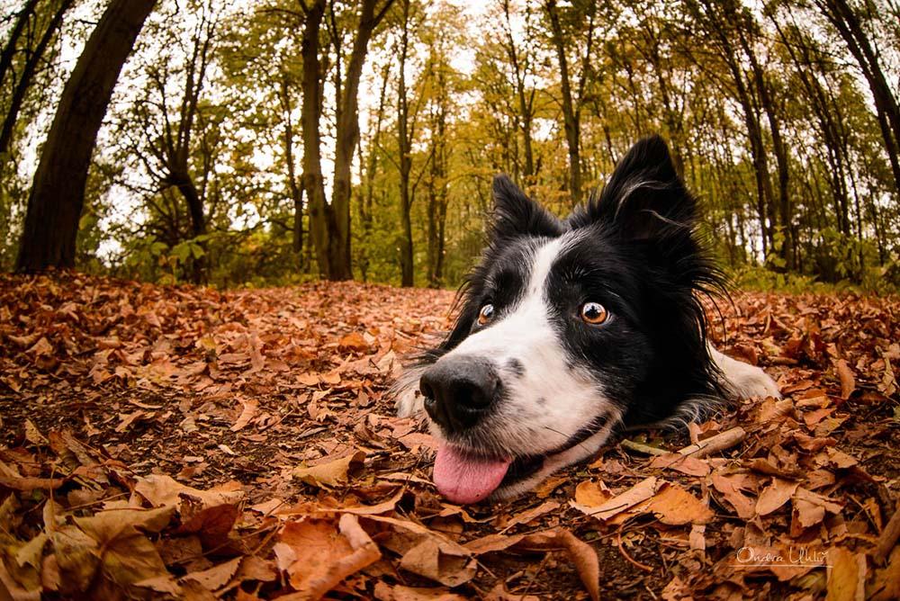 Ondřej Uhlíř fotograf psů