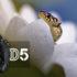 Nikon D5 hodnocení