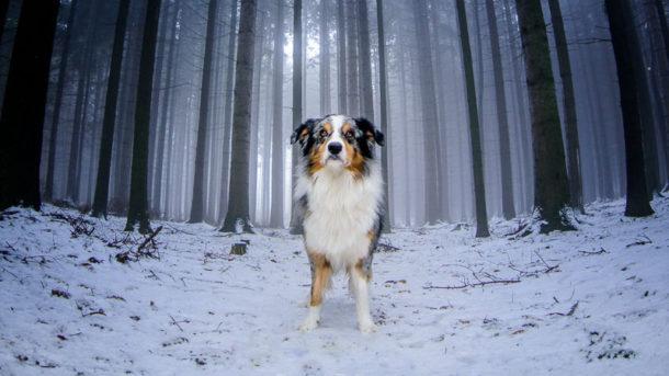 Jak na focení psů