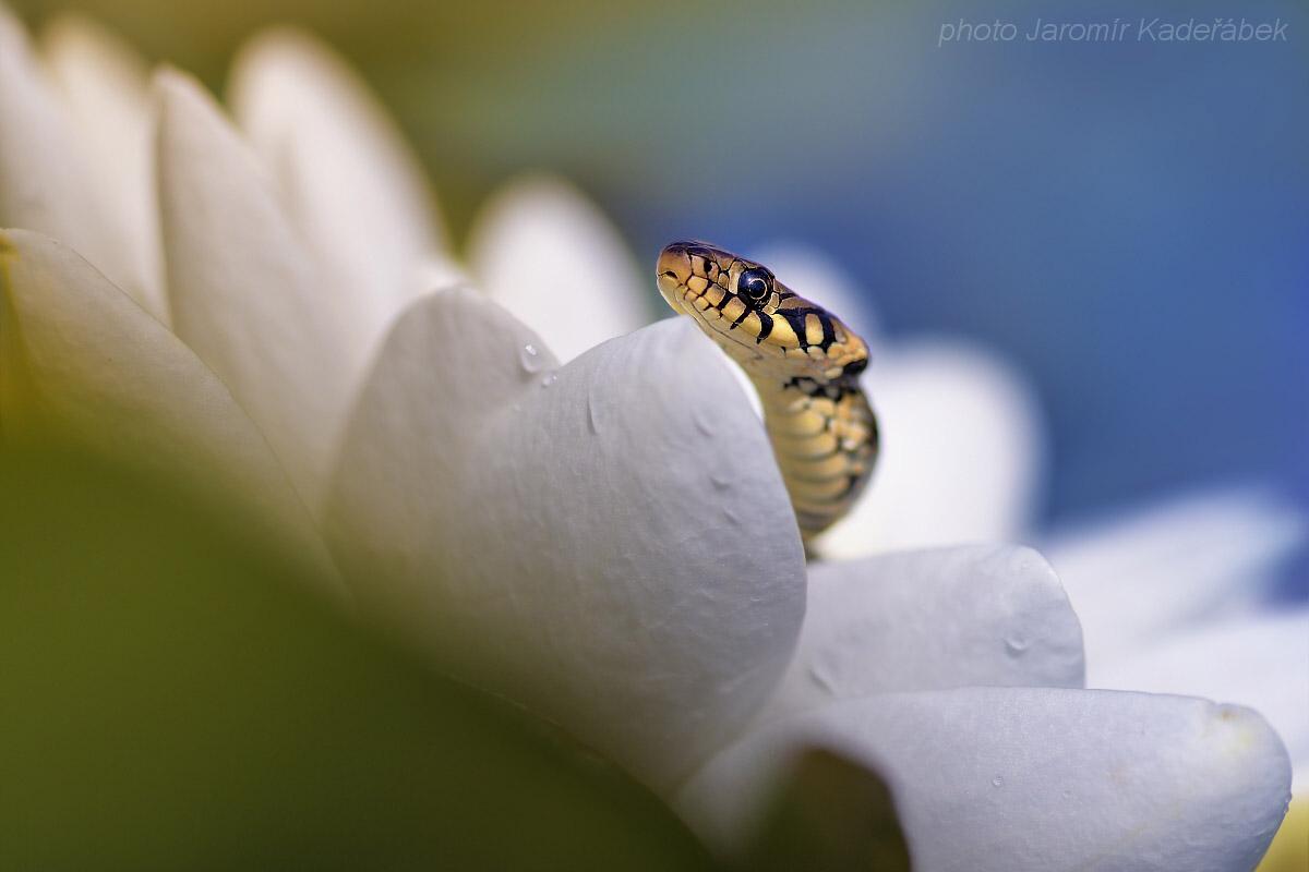 Nikon D5 ukázkový snímek
