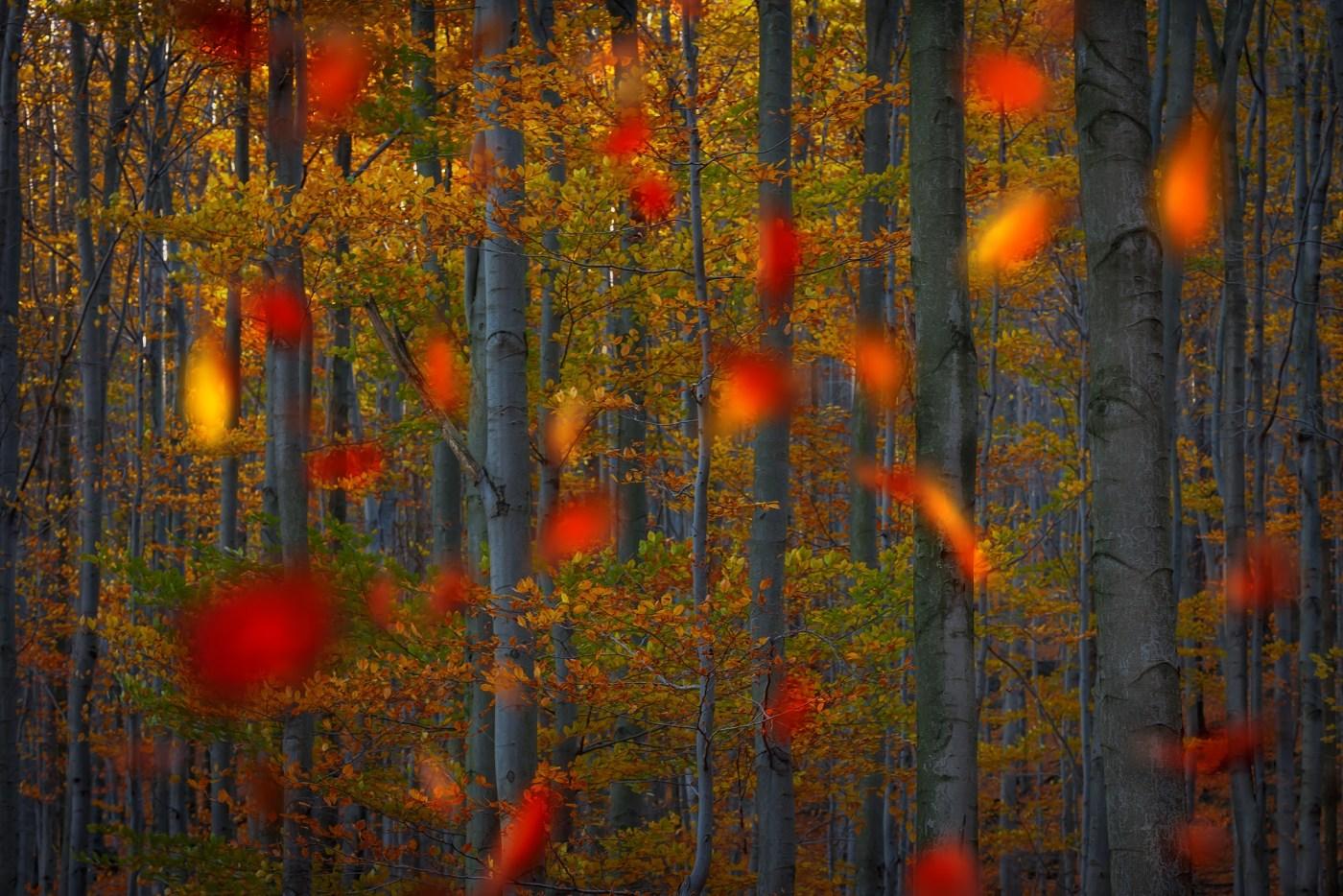 Jizerskohorské bučiny, Jizerské hory. D600, Sigma 150mm f/2,8 EX APO DG OS MACRO, clona f/8, čas 1/160.