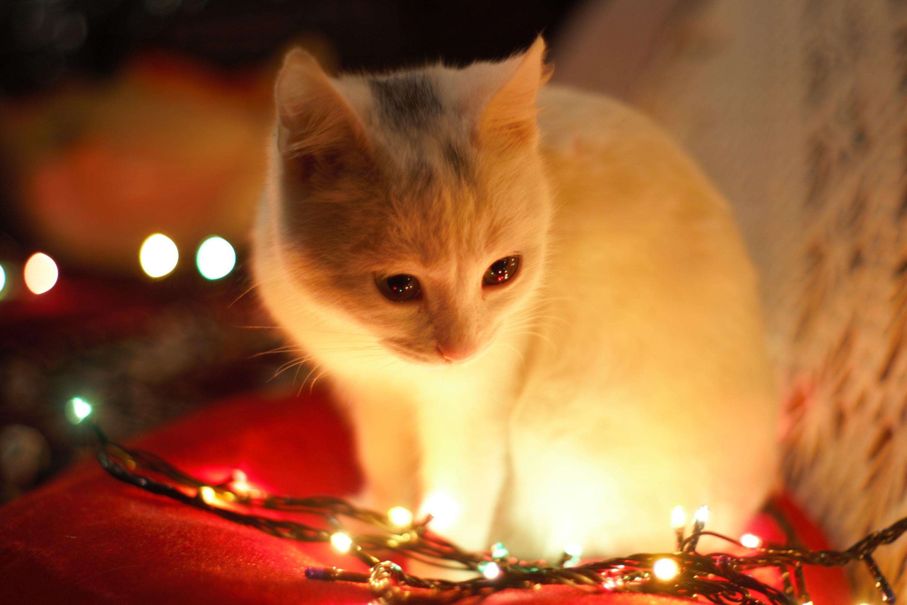 Jak vyfotit vánoční atmosféru