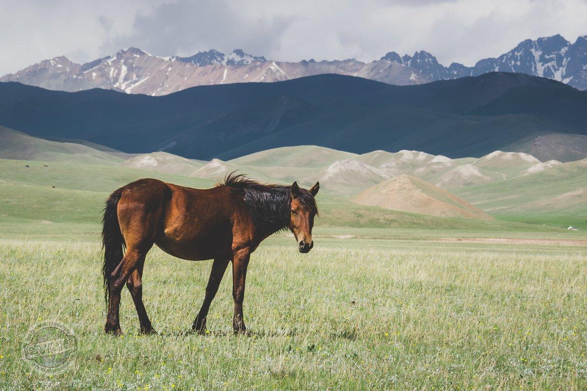 Pláně okolo jezera Song kul jsou plné pasoucích se koní.
