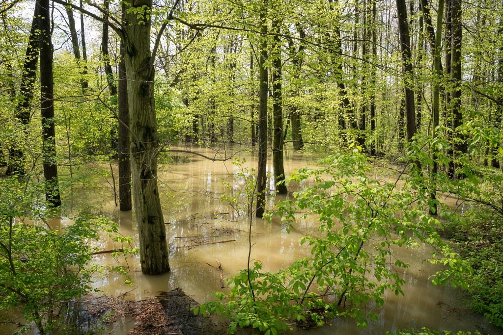 Rozliv v lužním lese