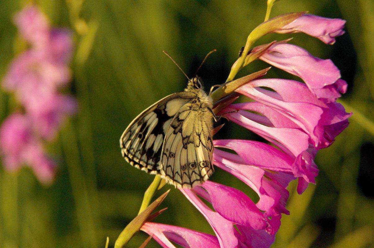 Martin Štecher: Orchideje Bílých Karpat