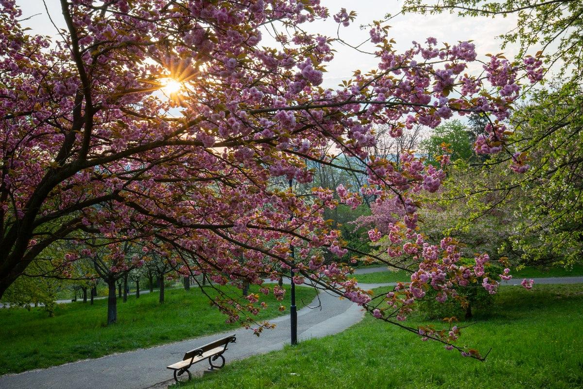 Jarní Petřín