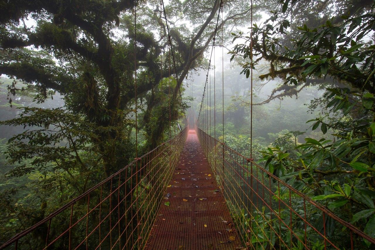 NP Monteverde