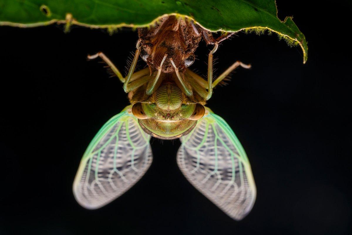 Detail hmyzu