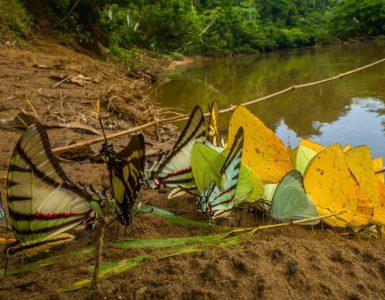 Skupina motýlů u řeky