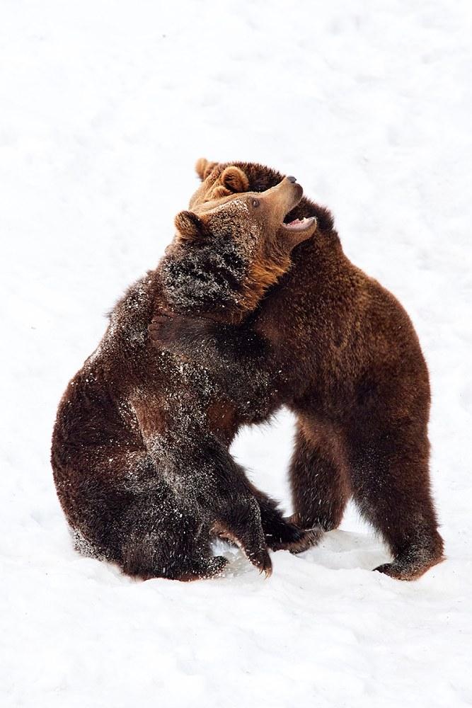 Medvědi – Bavorský les, Německo