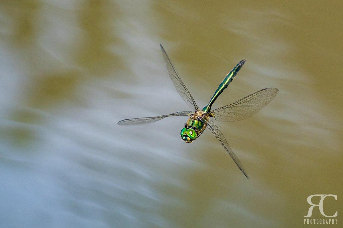 Focení hmyzu - vážky
