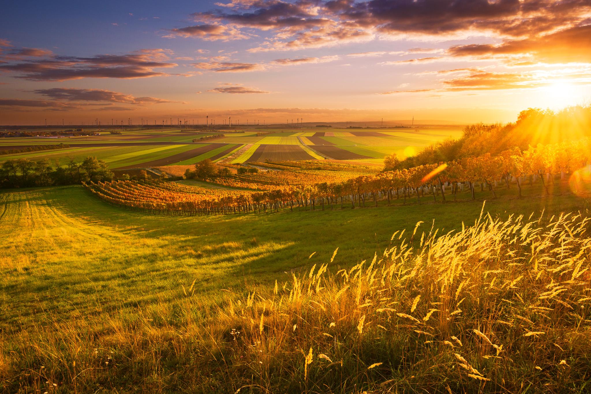 Pole a sad při západu slunce