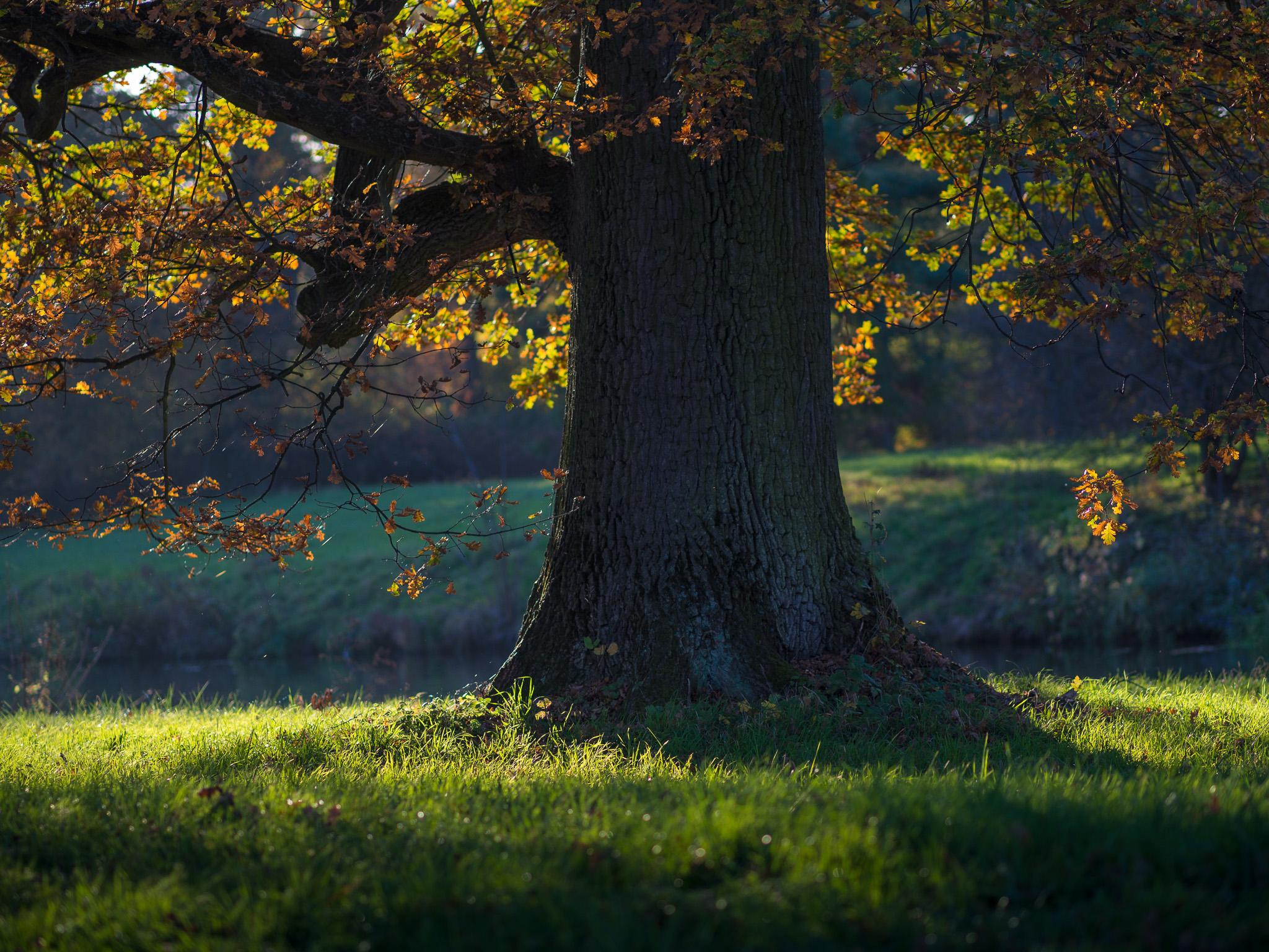 Strom při západu slunce