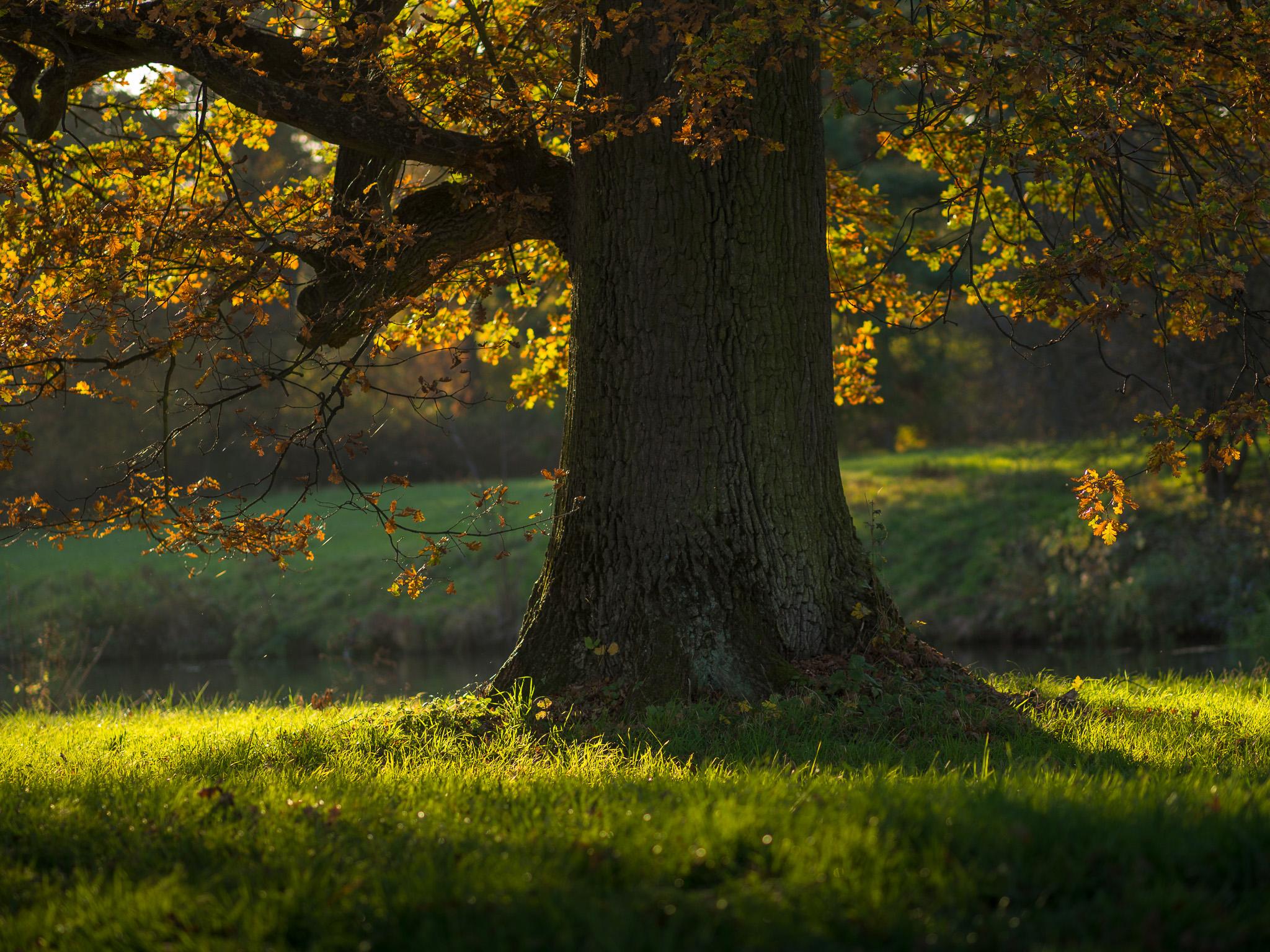 Strom při západu slunce, nastaveno denní světlo