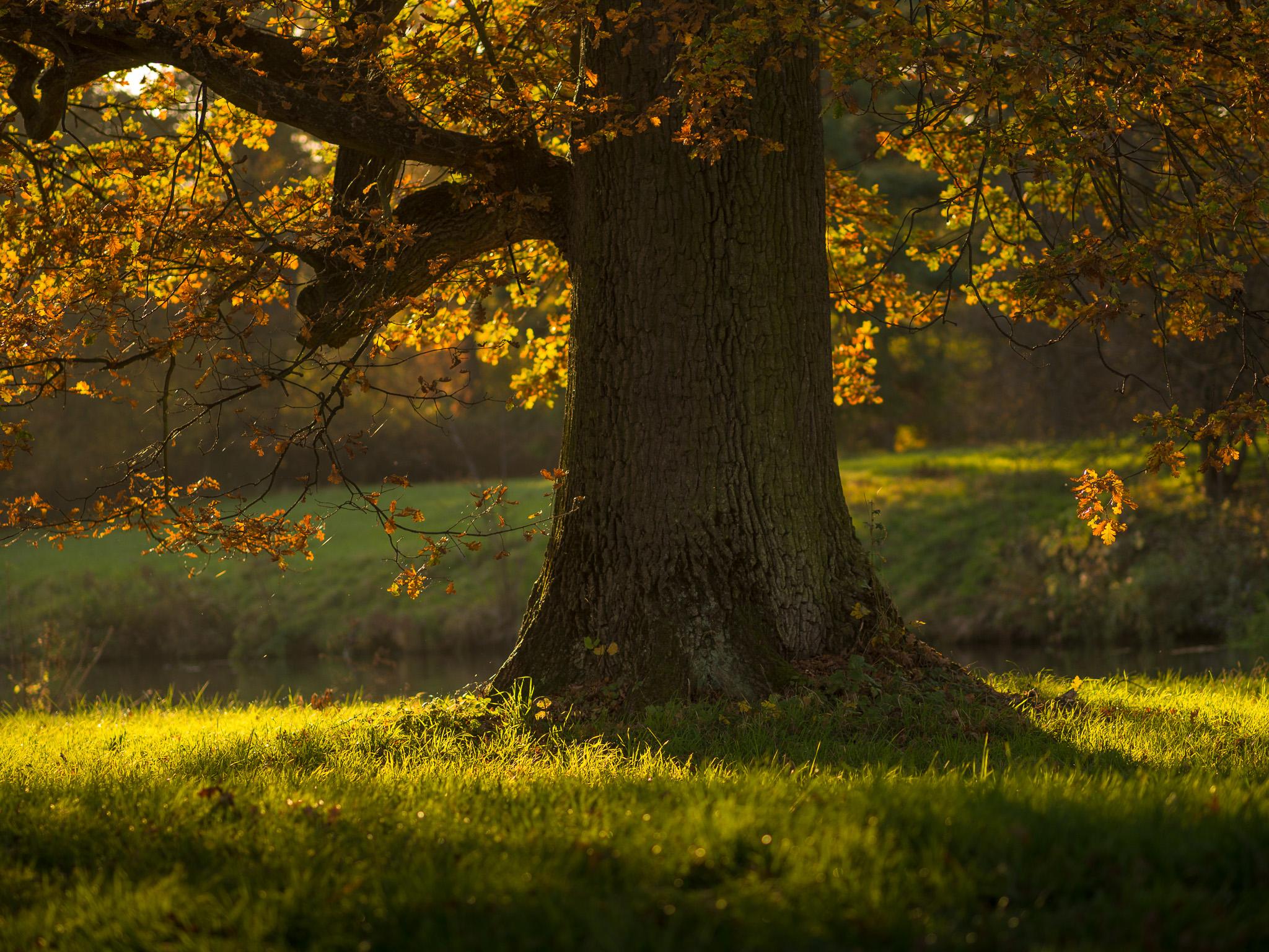 Strom při západu slunce upraveno