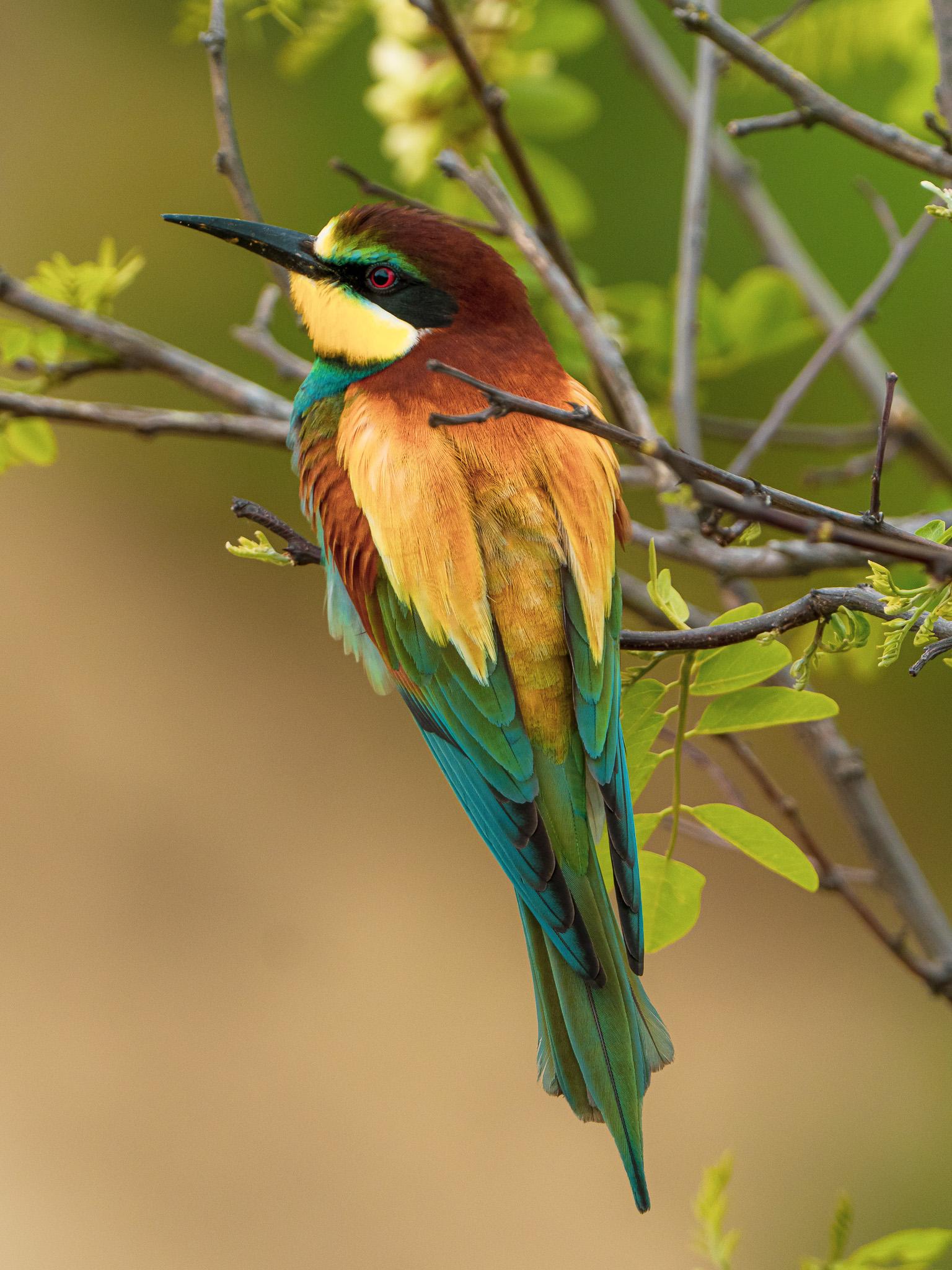 Pták na stromě