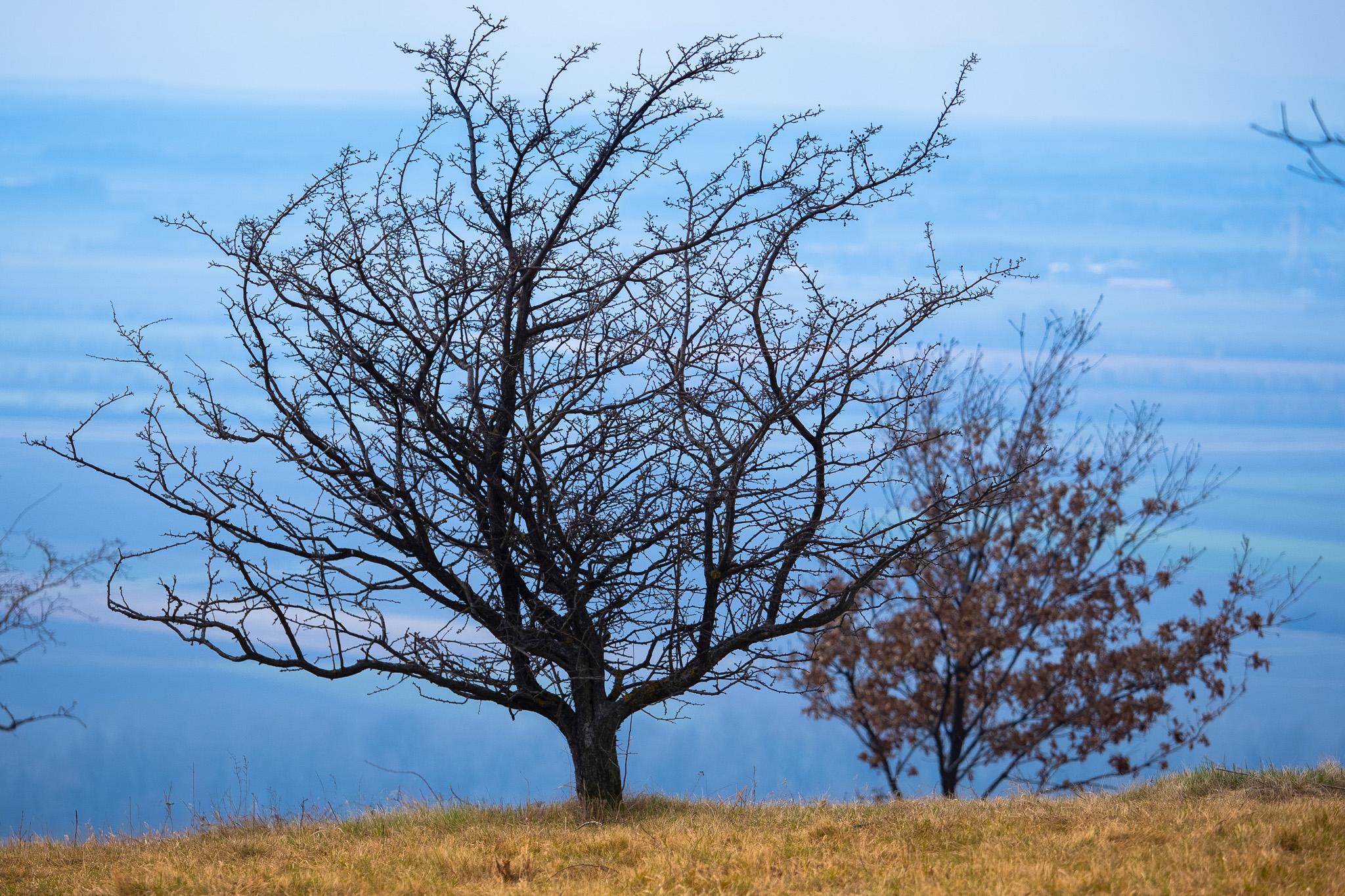 Hloubka ostrosti v krajině, podzimní strom