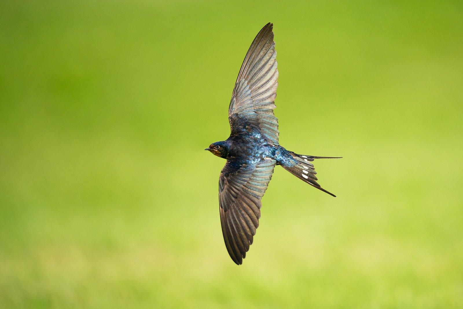 Pták v letu
